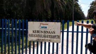PT.PRIMA JAYA Di Desa Sikijang, Diduga PT, SILUMAN ??Mengatas Nama Kan Markas Laskar Merah Putih